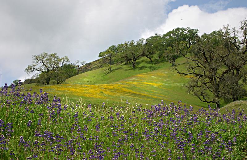 http://www.bobkellerphoto.com/images/Spring_Landscape_1_-_Mendocino_County.jpg